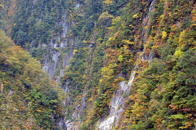 写真:登山道に秋の訪れ(S字峡~半月沢)
